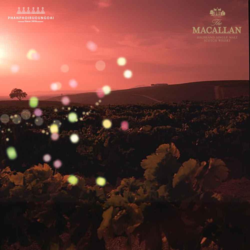 Rượu Macallan 12 Double Cask là sự cân bằng hoàn hảo giữa thùng gỗ sồi Sherry và thùng gỗ sồi Mỹ