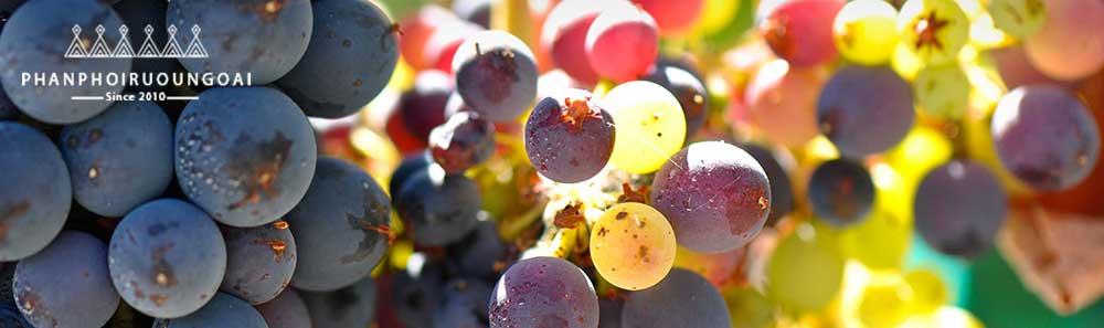 Giới thiệu các loại nho rượu