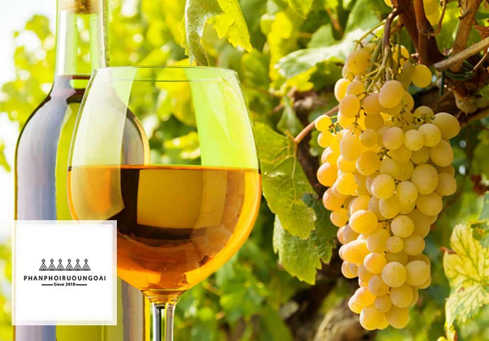Tìm hiểu giống nho Sauvignon Blanc