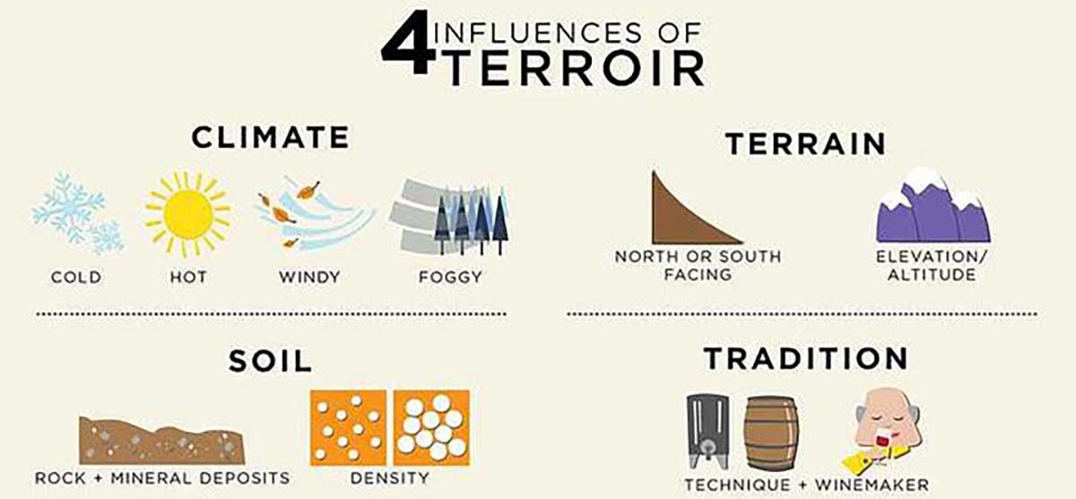 Các yếu tố ảnh hưởng đến chất lượng nho Sauvignon Blanc