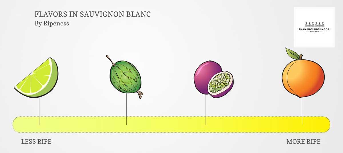 Hương vị của giống nho Sauvignon Blanc