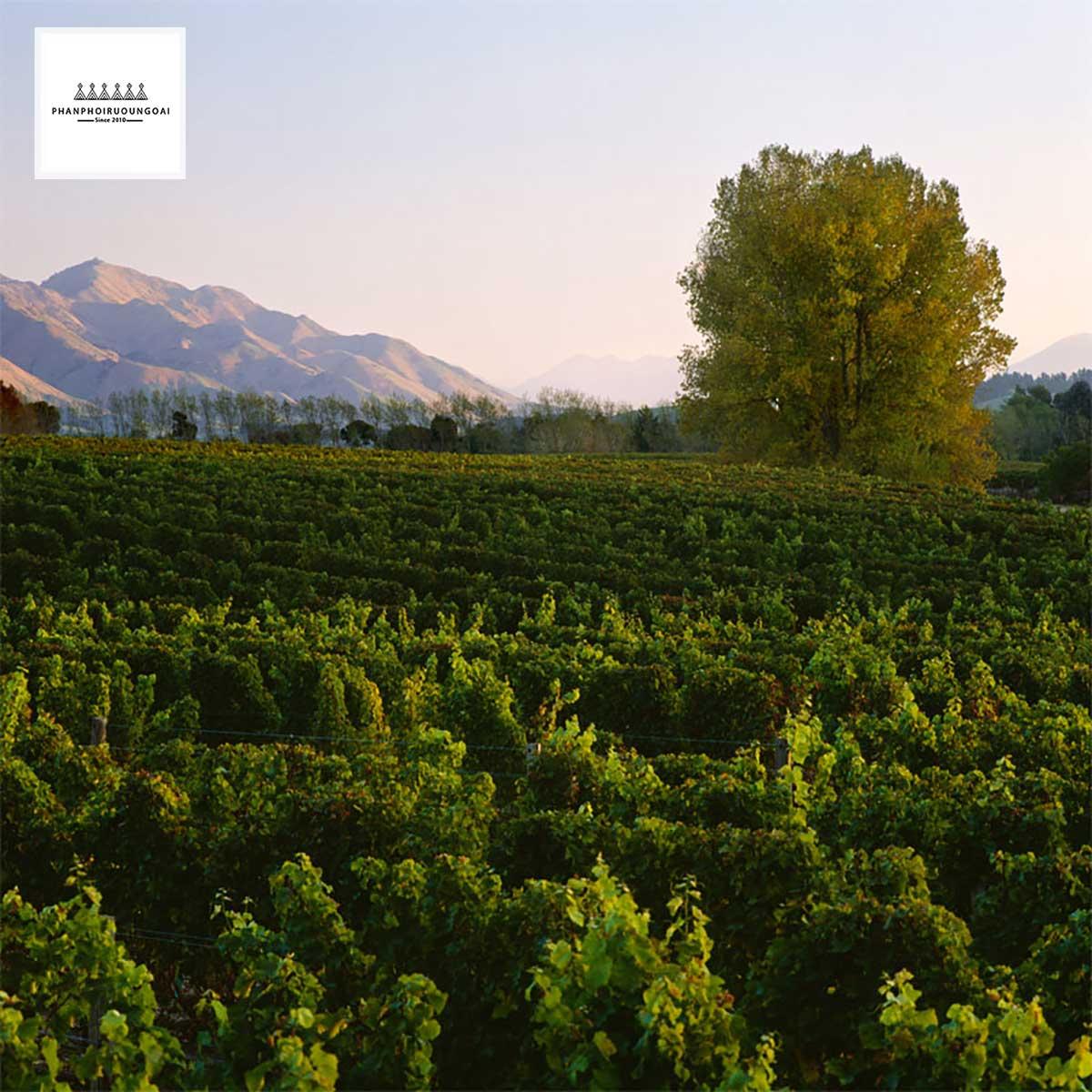 Quê hương Marlborough của rượu vang Little Beauty