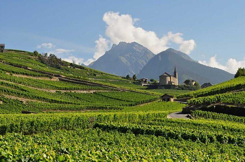 Rhone valley vùng rượu vang nổi tiếng của Pháp
