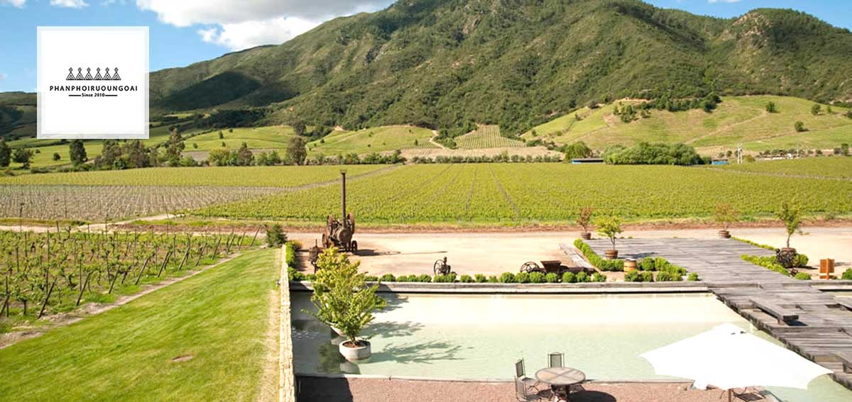View nhỉn ra vườn nho của nhà Montes