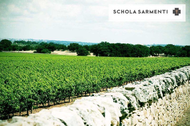 Vườn nho trẻ của nhà Schola Sarmenti