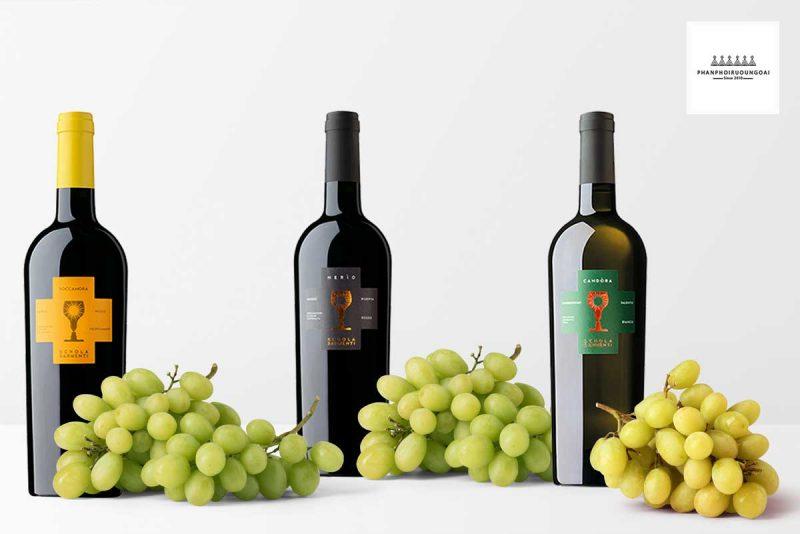 Các loại rượu vang chén thánh Schola Sarmenti