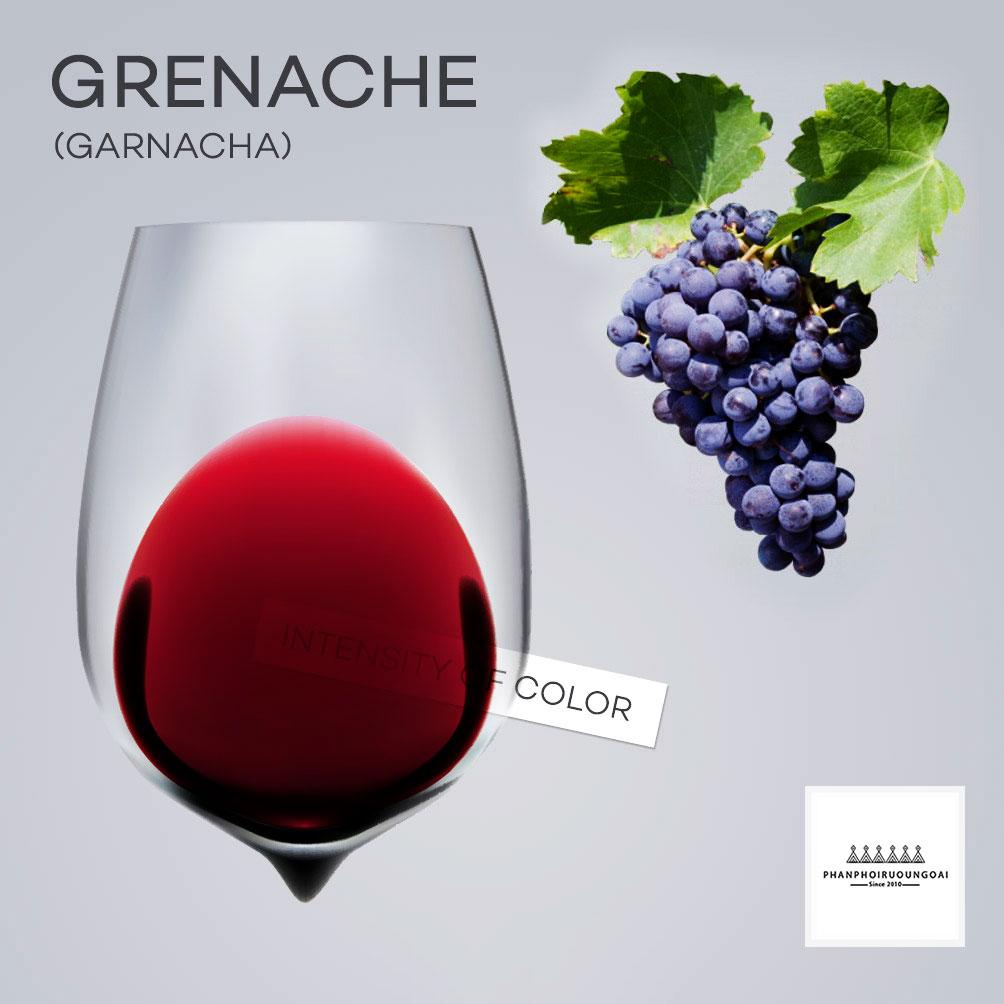 Tìm hiểu giống nho đỏ Grenache và màu sắc rượu vang từ giống nho đó