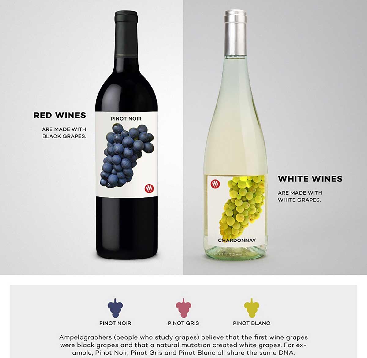 Sự khác biệt về giống nho làm nên rượu vang
