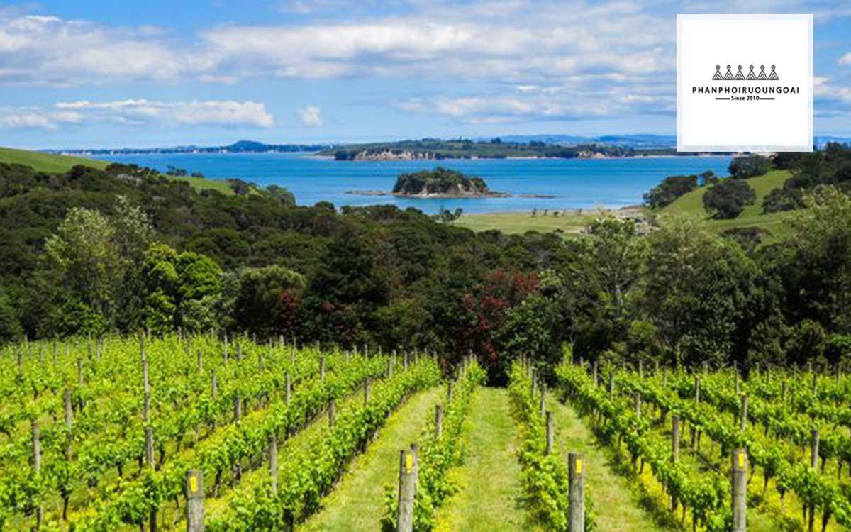 Vườn nho tại Aukan - New Zealand
