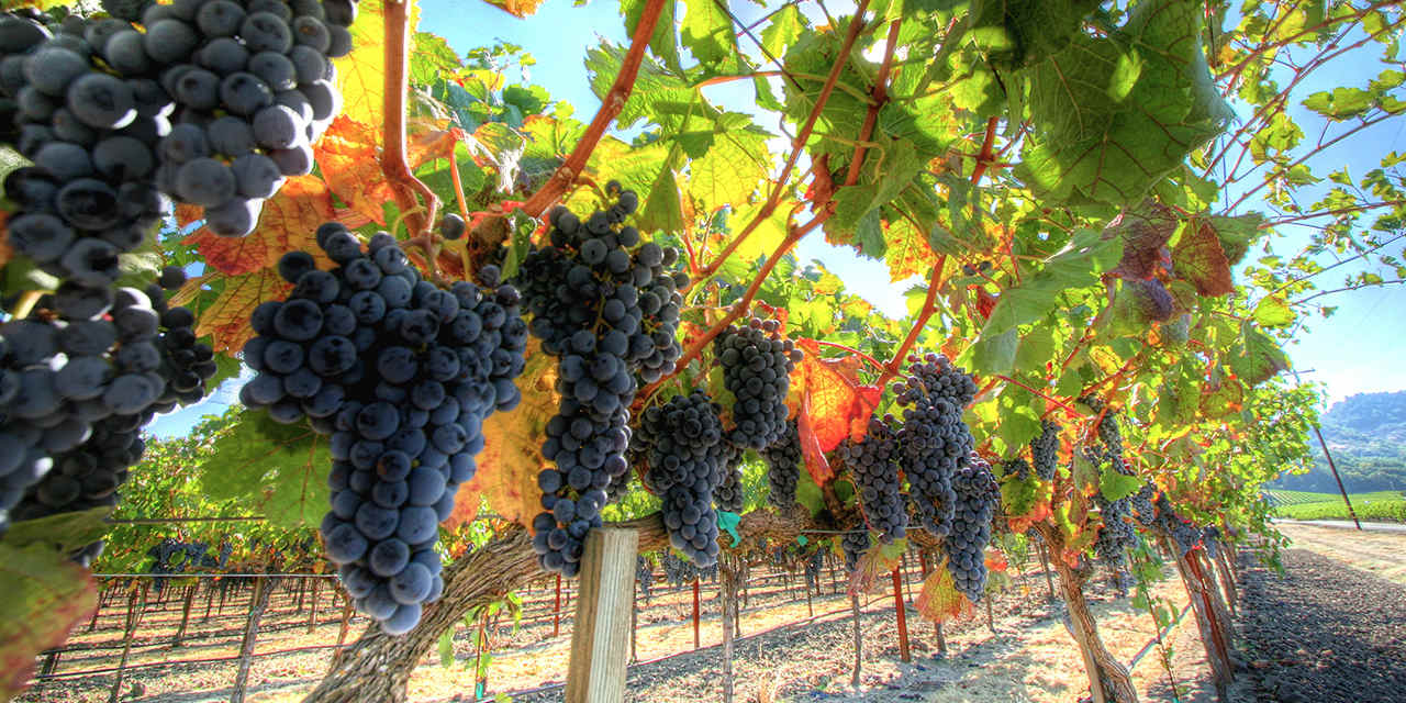 Khám phá vùng rượu vang Bordeaux