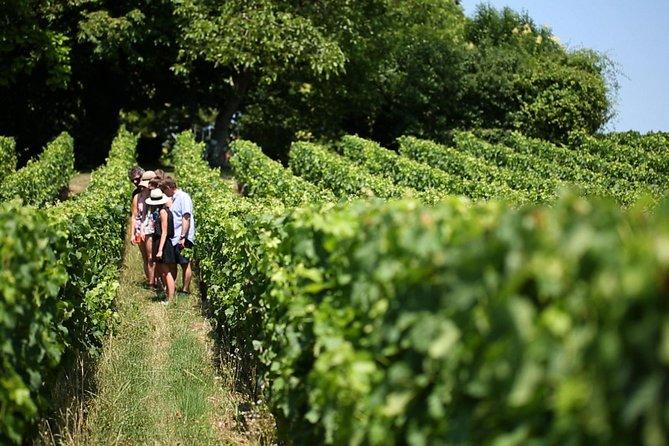 Các du khách nghé thăm những vườn nho vùng Bordeaux