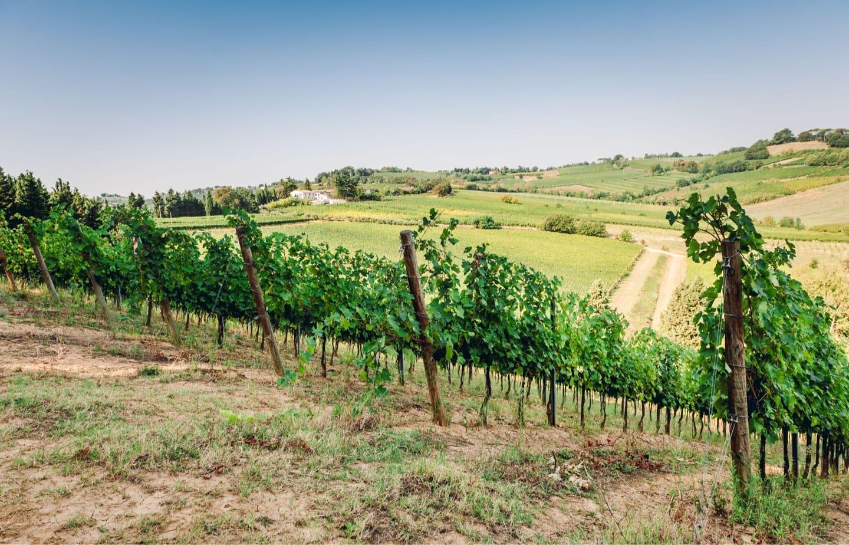 Câu chuyện từ những vườn nho của rượu vang King Ruvaes