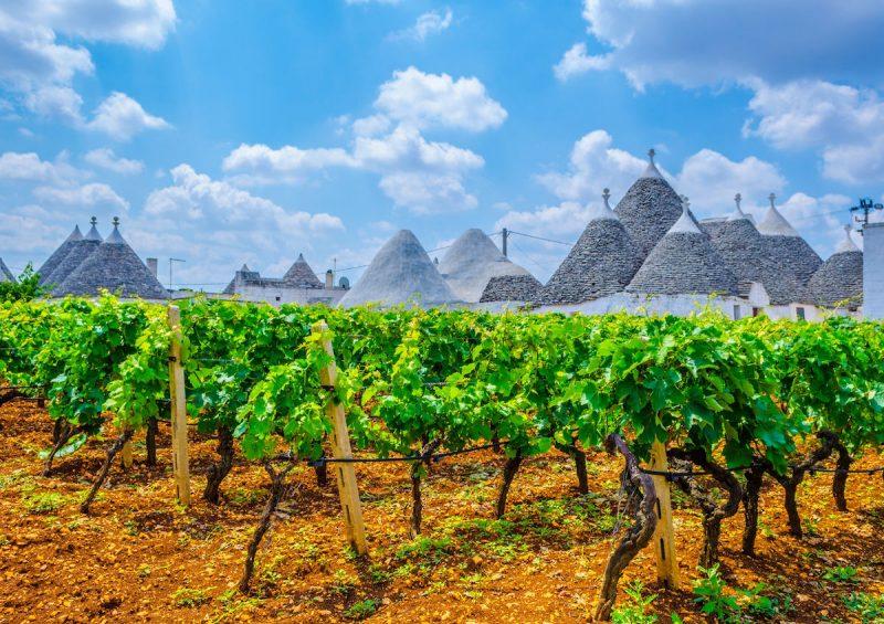 Cánh đồng nho tuyệt đẹp tại Puglia nước Ý