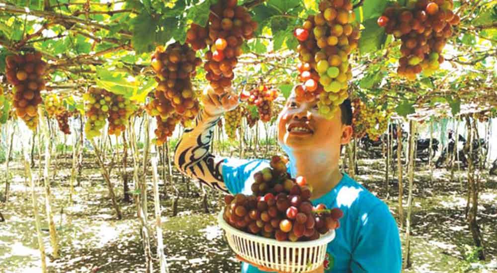 Rượu Vang Thăng Long nét cổ xưa trong lòng hiện đại