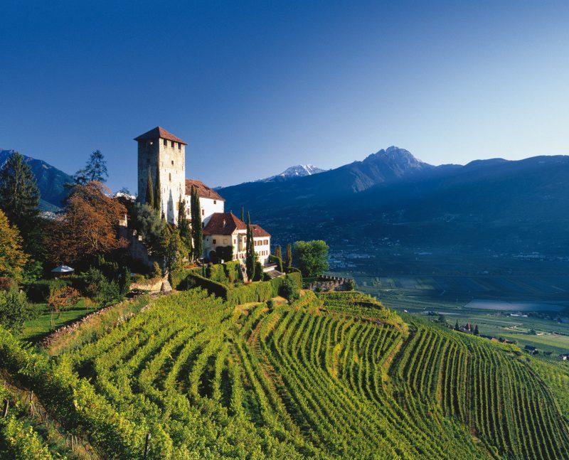 Khu vực trồng nho Puglia tại Italia nơi làm ra những chai rượu vang ngon