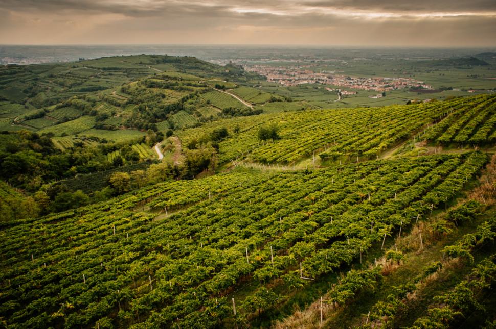 Vùng làm rượu vang Massimo Gori tại Puglia Ý