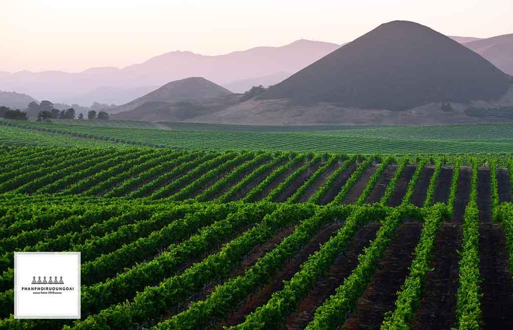 Cánh đồng nho tuyệt đẹp tại Central Valley Chile