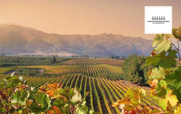 Thung Lũng Rượu Vang Uy Tín Central Valley của Chile