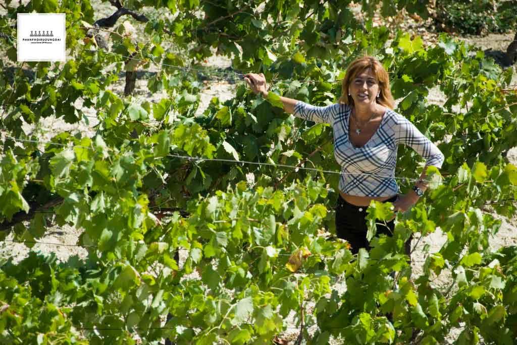 Chủ tịch Angela Velenosi bên vườn nho