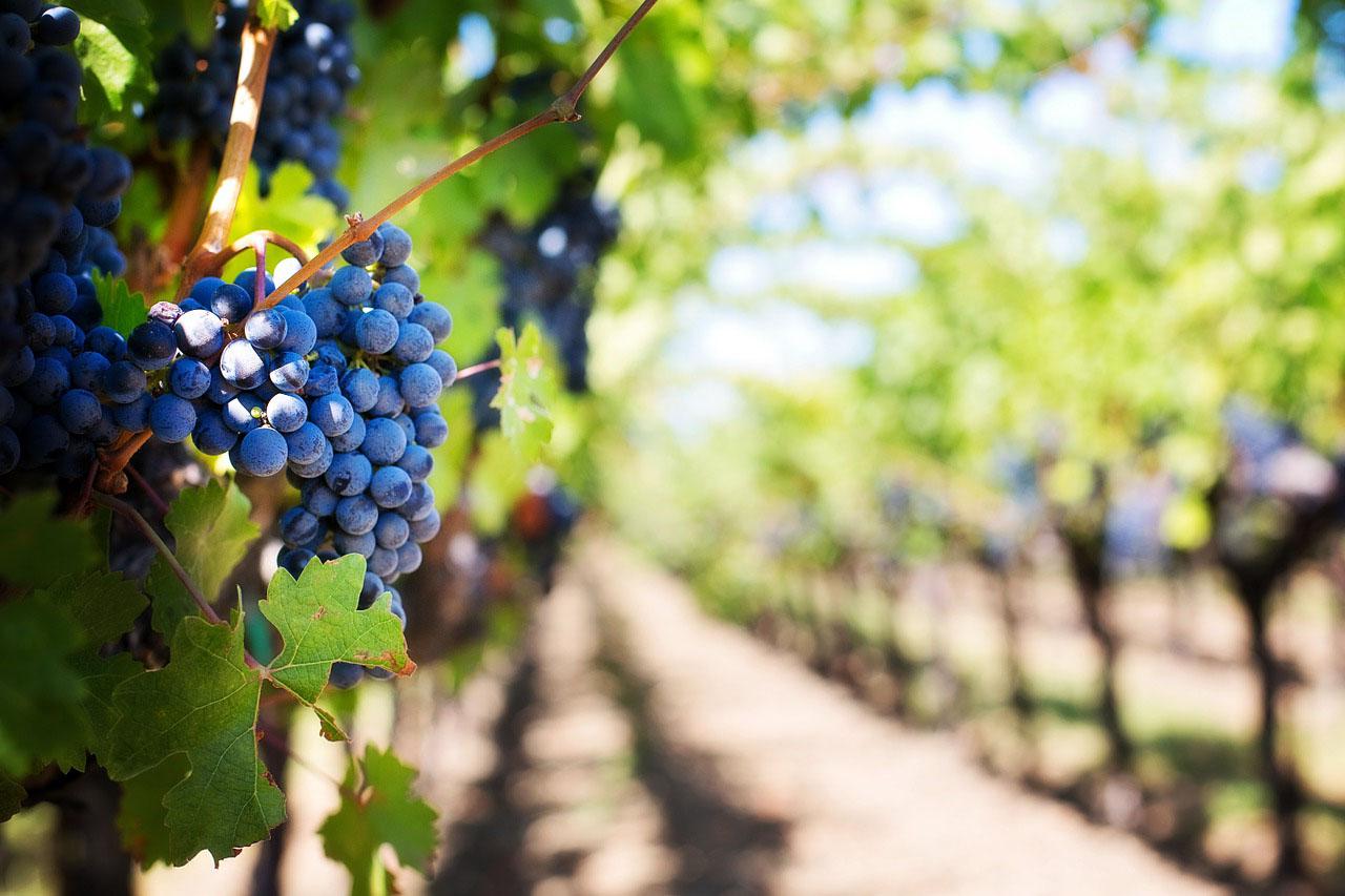 Hàng triệu lít rượu vang Pháp đang trở thành nước rửa tay cho Covid-19