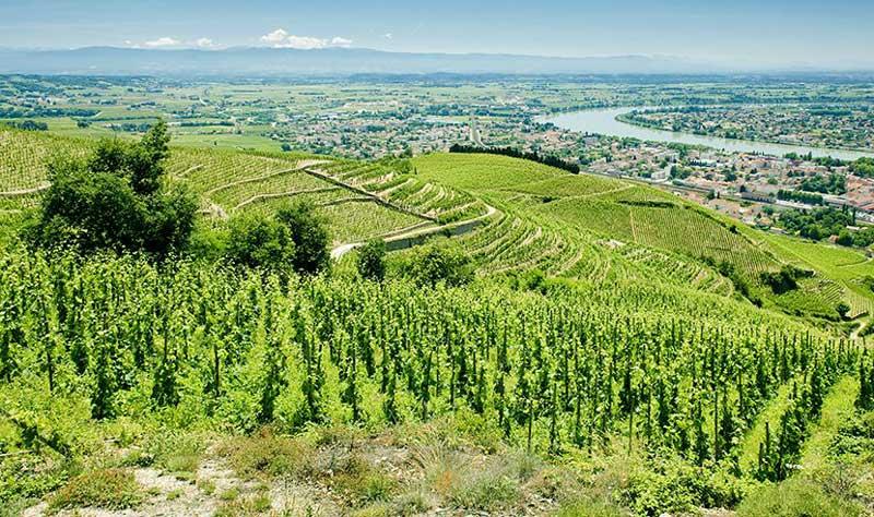 Tìm hiểu phong cách rượu Rhône / GSM Blend