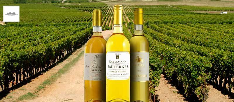 Rượu vang Sauternais và vườn nho nằm gần sông tại Bordeaux