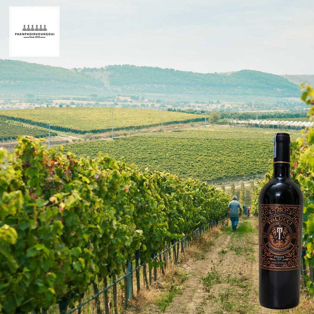 Miền nam nước Ý Puglia nơi ra đời những chai vang chất lượng cao