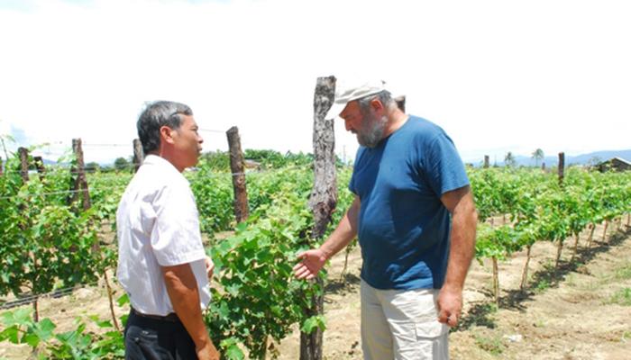 Rượu vang đà lạt mở rộng vùng nguyên liệu