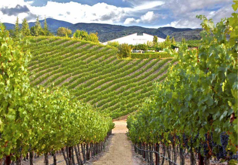 Những vườn nho tốt nhất tại Bordeaux để làm ra rượu vang Louis Eschenauer