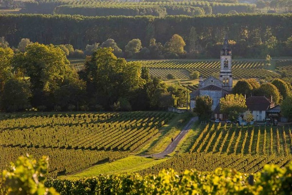 Những vườn nho tiêu chuẩn tại Bordeaux `